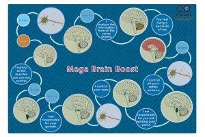 brain boost board