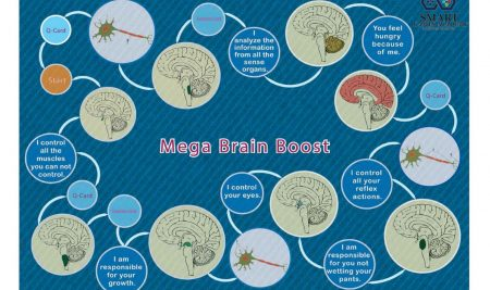 Mega Brain Boost Game